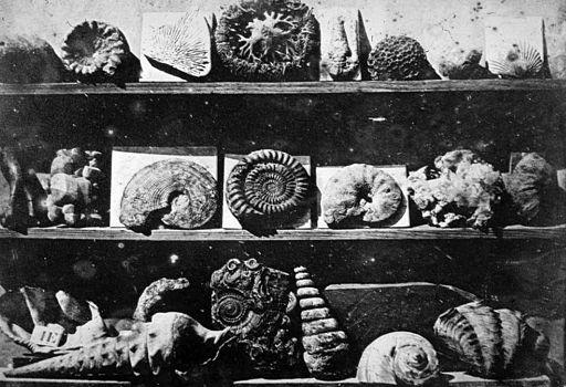 Lous_Jacques_Mande_Daguerre_Shells_and_Fossils_1839.sized